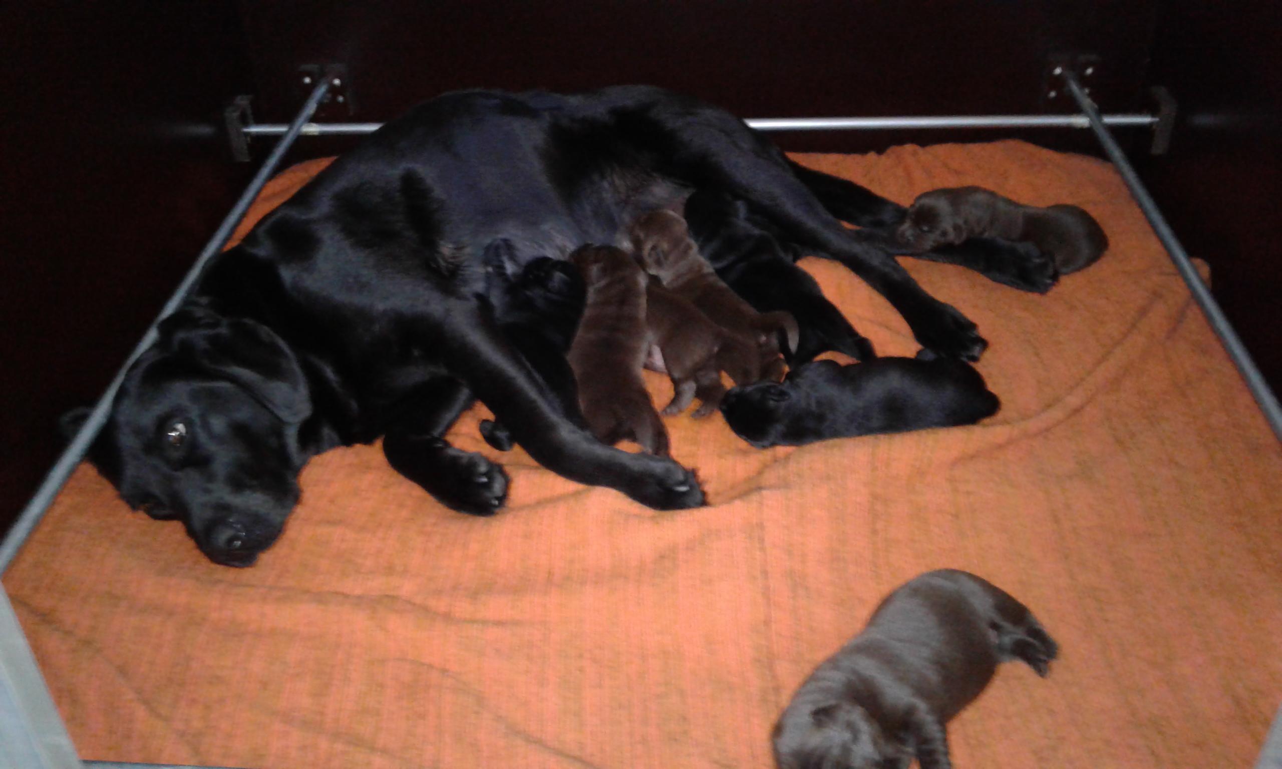 Pups één week oud.