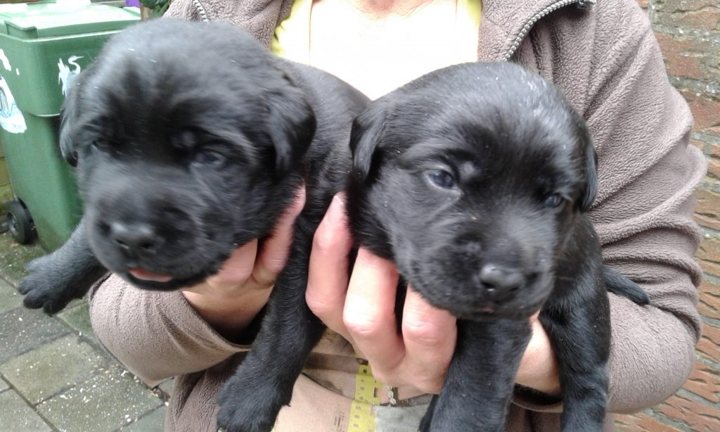 pups Lucky en Ozzie week 2 en 3 030